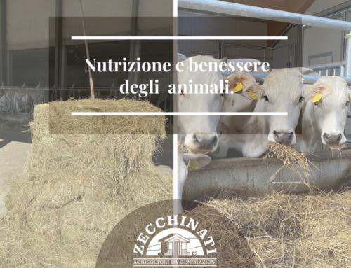 Nutrizione e benessere animale